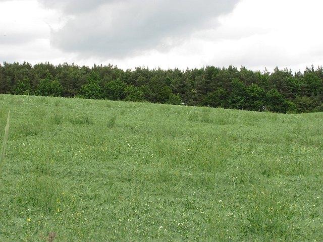Arable land, Maidenhall