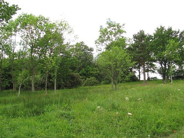 Woodland, Maidenhall