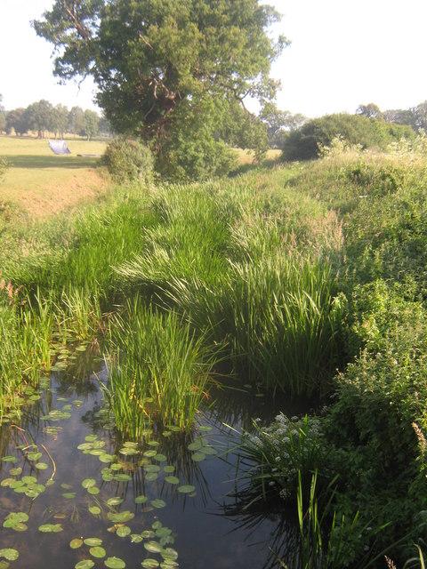 River Eden - looking upstream