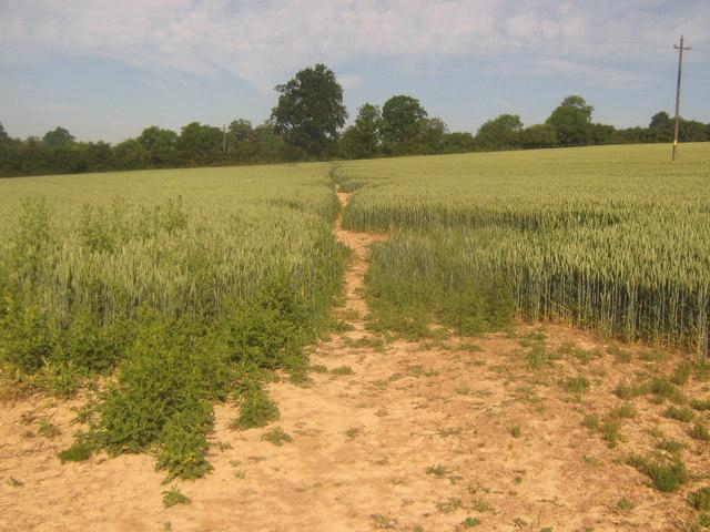 Footpath towards Hill Hoath (2)