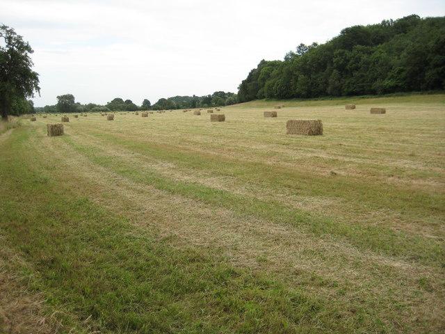 Hay field near Bransford Court
