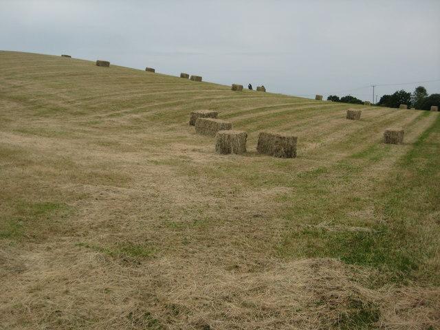 Hay bales near Bransford Court