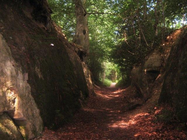 Eden Valley Walk in Moor Wood (2)