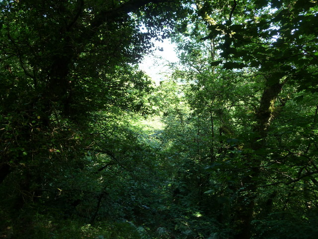 Canonteign Falls : Woodland
