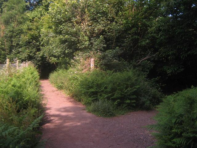 Footpath and bridleway junction in Moor Wood