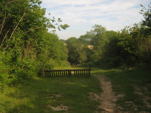 Track in Moor Wood