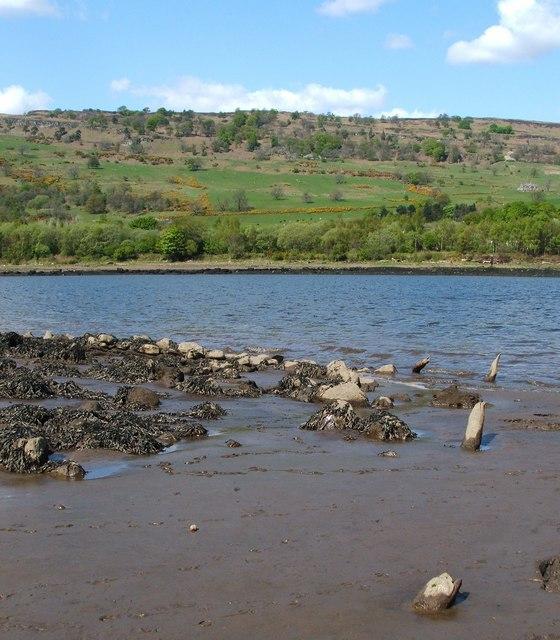 Erskine Crannog: remains of timber piles