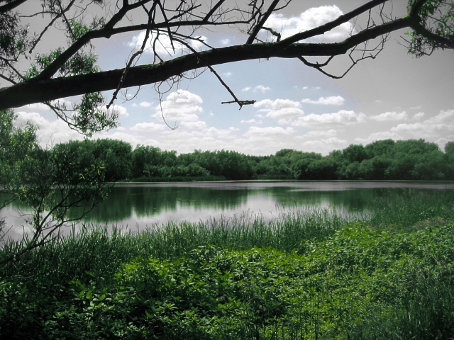 Un-named lake, Altofts Ings (2)