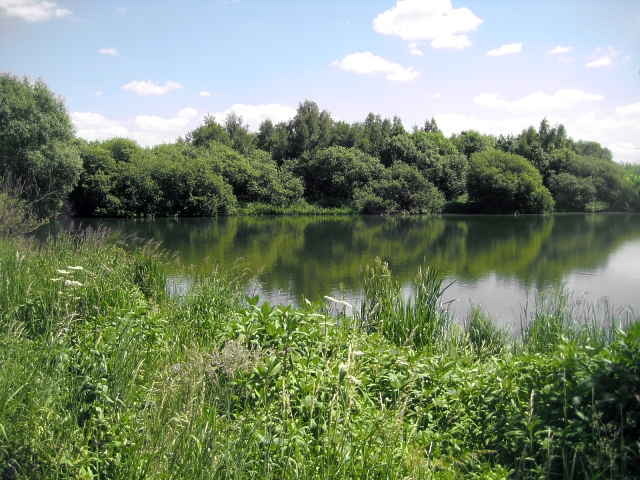 Un-named lake, Altofts Ings (3)