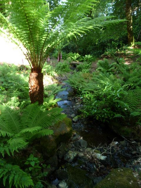 Canonteign Falls : Woodland & Stream