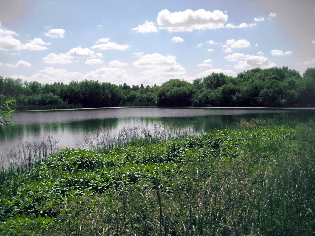 Un-named lake, Altofts Ings (4)