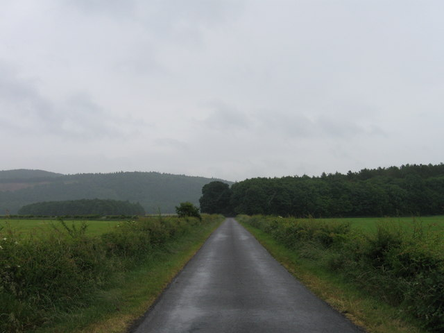 Country Lane on a soft day