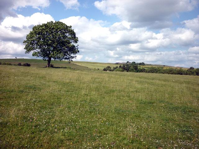 Pasture land, Brackies Burn near Vindolanda