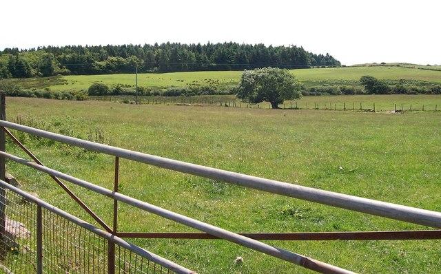 View across farmland towards Coed Bodgadle woods