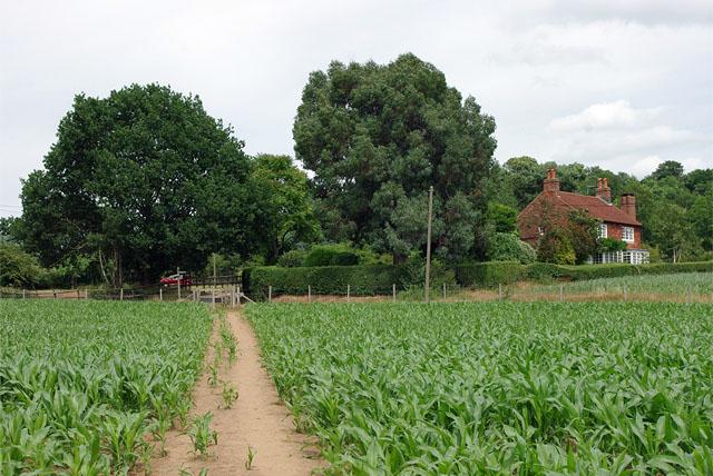 Footpath towards Ede's Fields