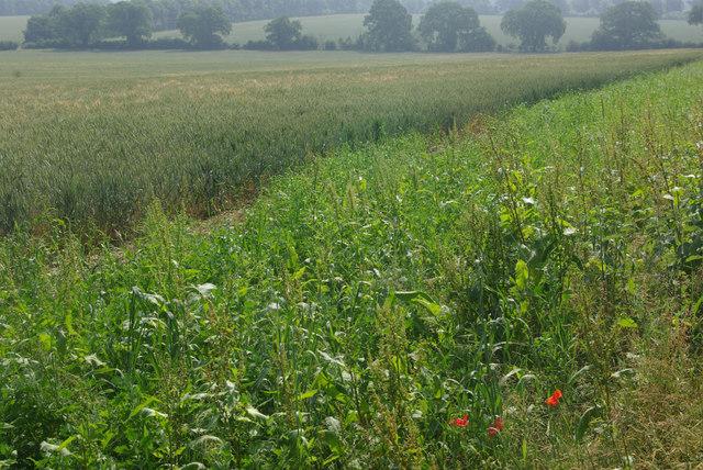 Farmland near Thetford