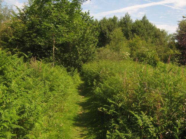 Footpath towards Oak Wood