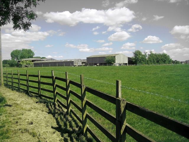 Rose Farm, Foxholes