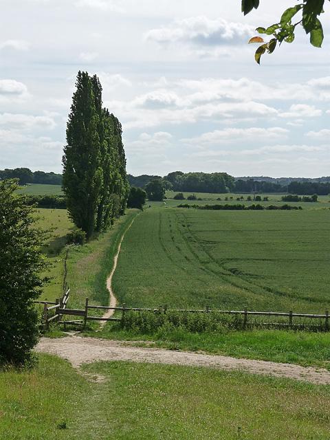 Farmland, West Wickham