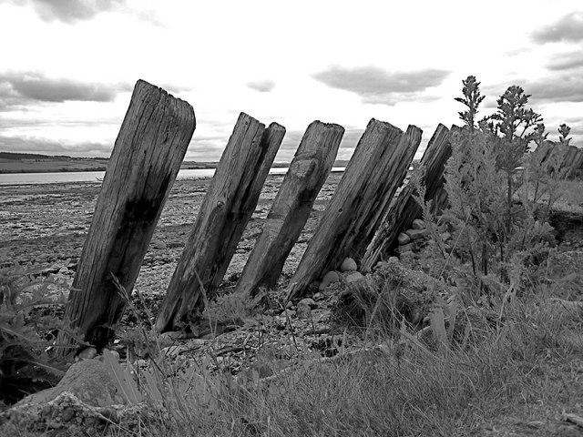 Kiltearn: shore defences