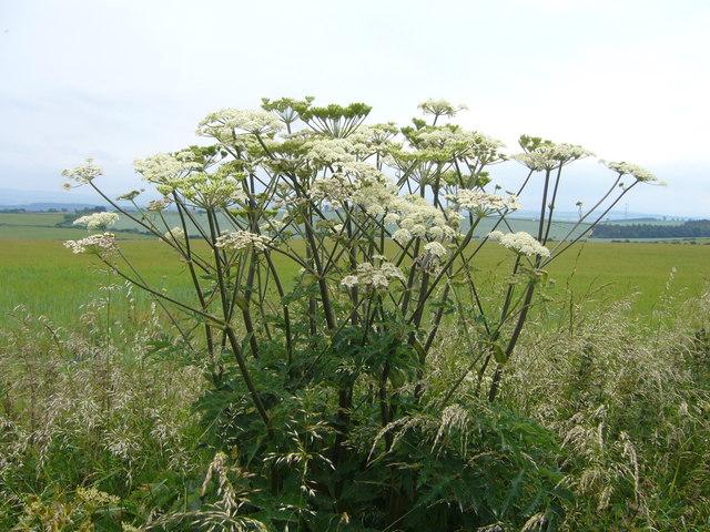 Plant on Falside Hill