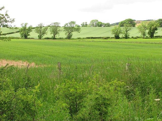 Barley, Whitrig