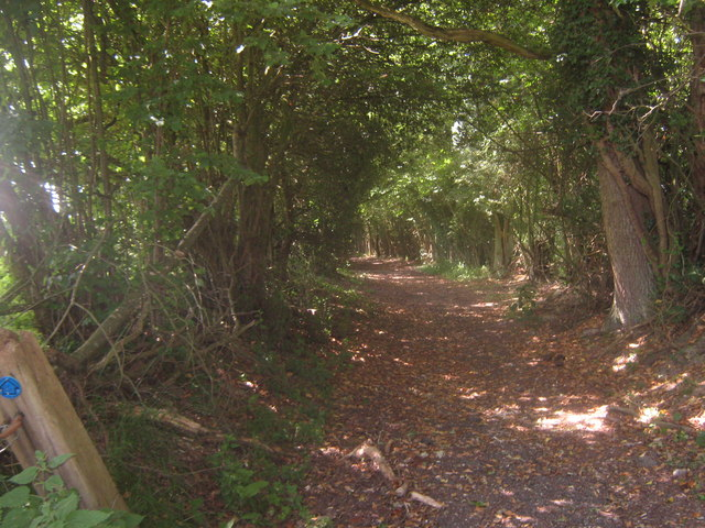 Bridleway in Gilridge Wood