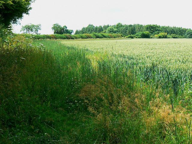 Field margin west of Hartham Lane, Biddestone