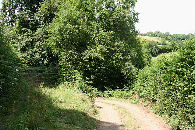 Holne: track to Great Combe