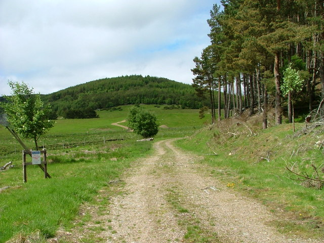 Track into Kyllachy Forest