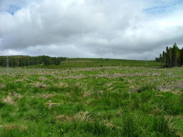 Clear fell in Kyllachy Forest