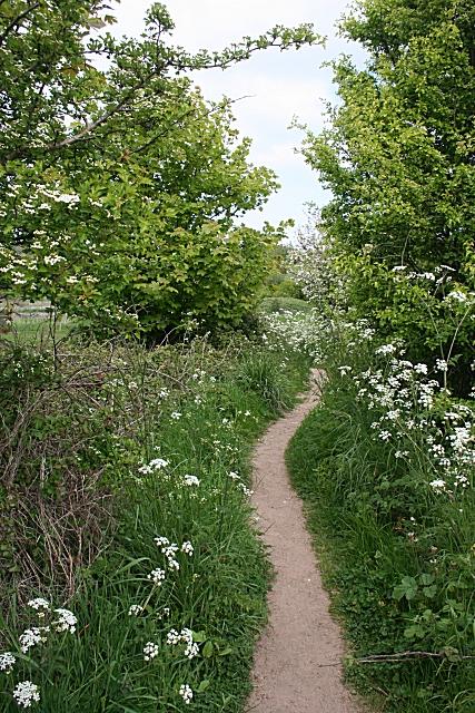 Path by the Afon Lleiniog