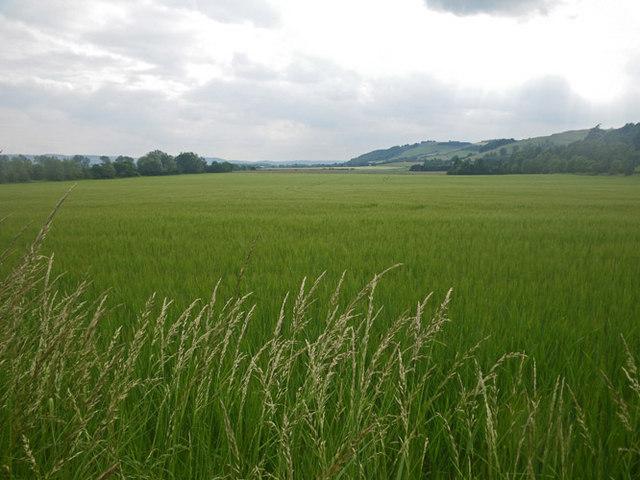 Looking across endless fields