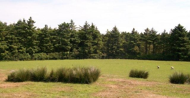 Coed Bodgadle woodland