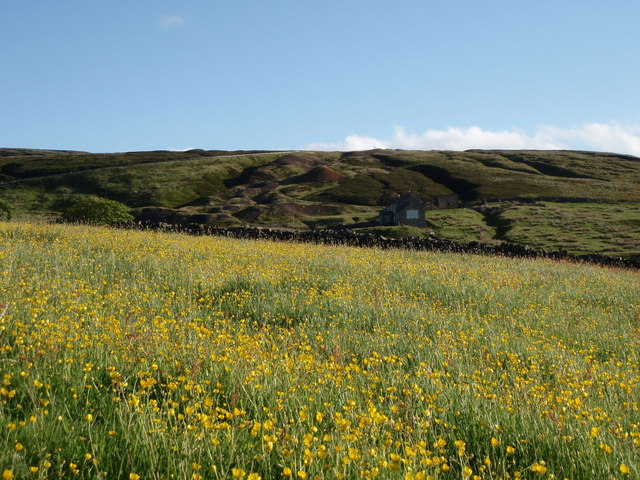 Buttercups  Coalcleugh