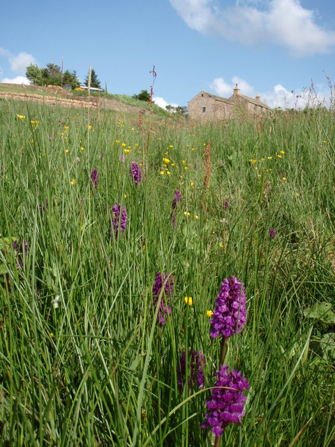 Orchid Way Nentsberry
