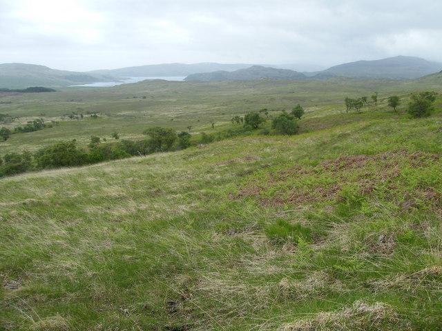 View SW across a few trees towards Loch Spelve
