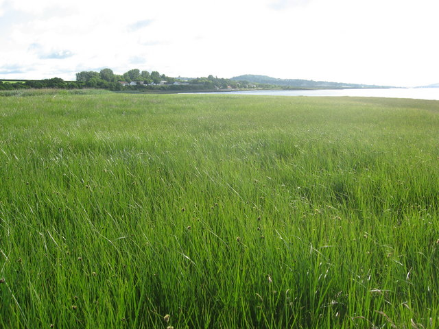 Marsh grass at Kingoodie Bay looking East to Dundee