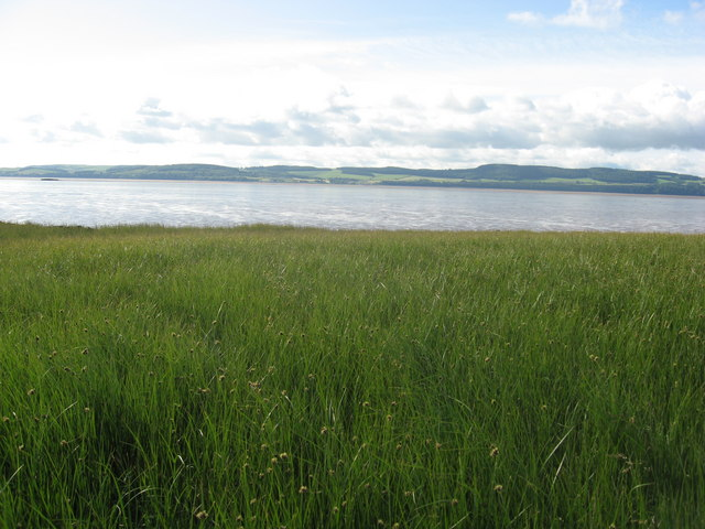 Marsh land on the North bank of the Tay estuary