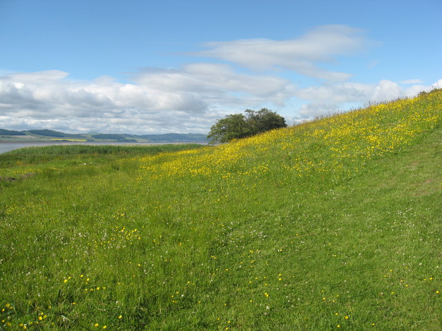 A flowery meadow bank on the North shore of the Tay