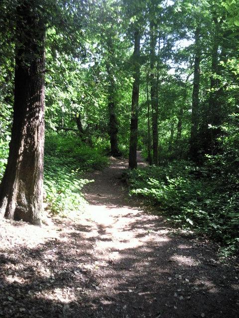 Green Chain Walk in Bostall Woods