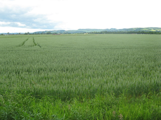 Wheatfield South of Inchture