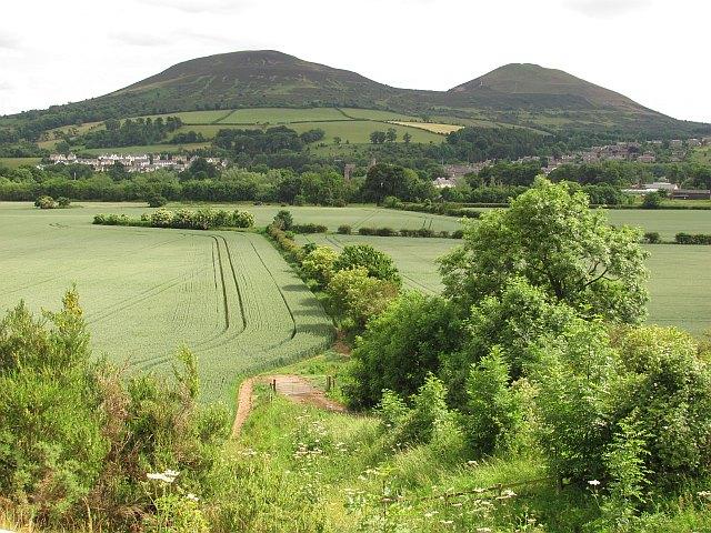 Wheat fields, Gattonside