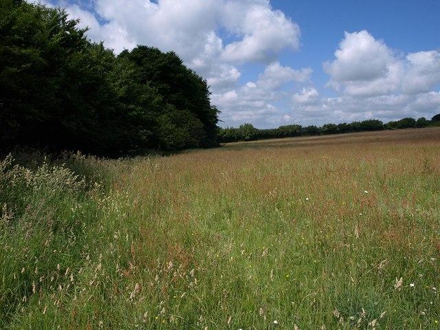 Meadow near Sedgeborough