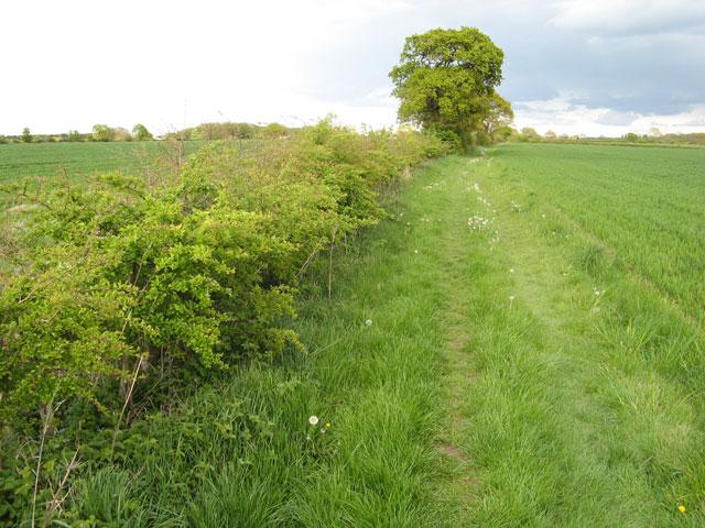Bridleway to Fosse Way (2)
