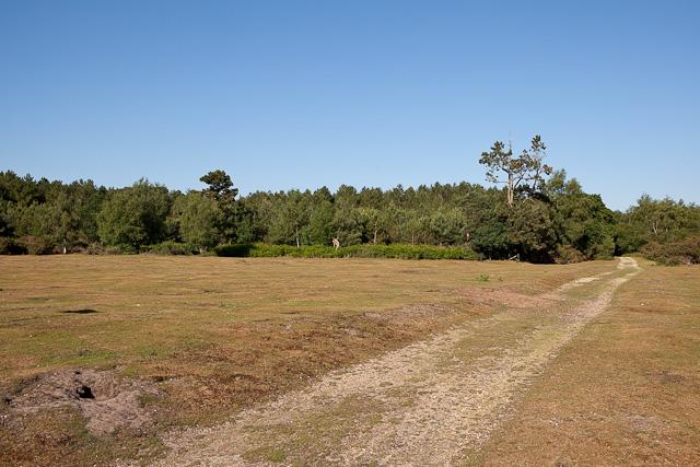 Black Firs plantation