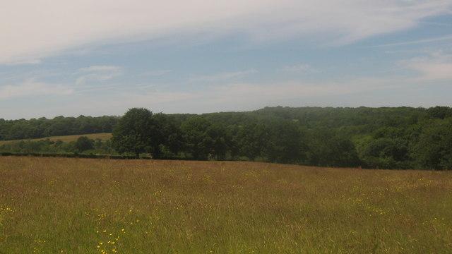 View of Cobhambury Wood