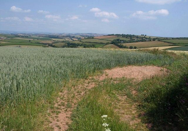 Wheatfield above Capton
