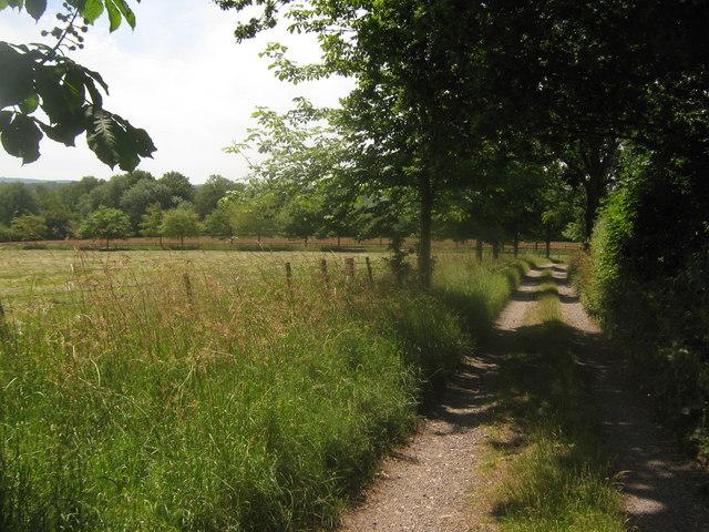 Bridleway from Ludwells Farm