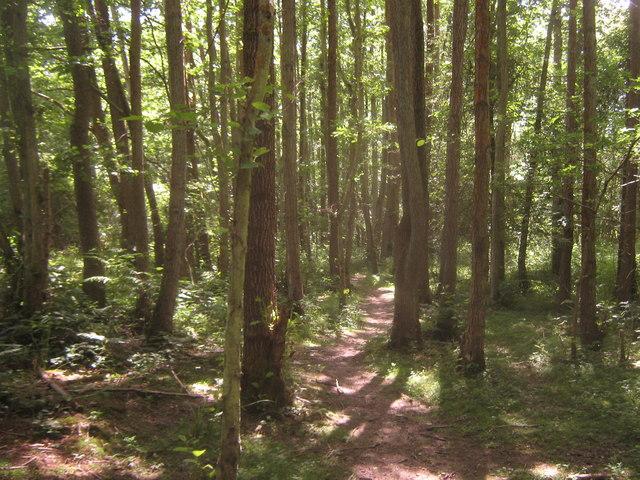 Footpath in Tickners Wood